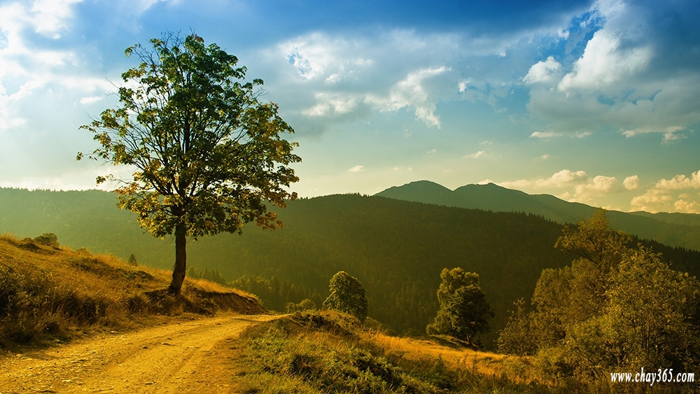 tree-on-the-green-hill-nature-hd-wallpaper-2560x1440-6074