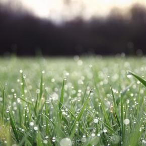 grass-water_00239745